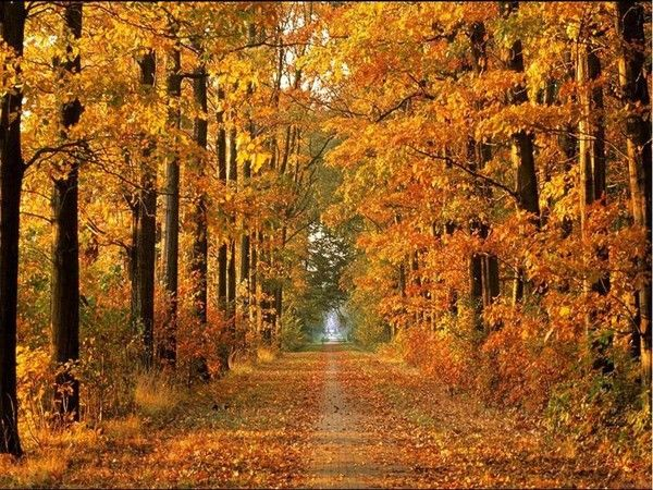 l'automne 9