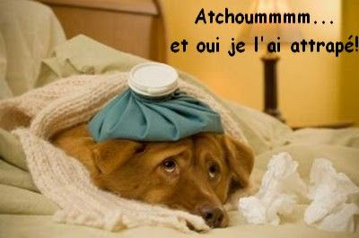 atchoum 50