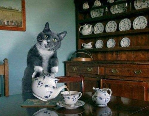 Chat prépare le café
